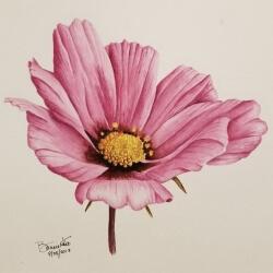 Bonnie Kost | Pink Cosmos