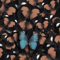 Butterflies--Karen West